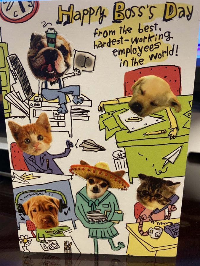 Funny Boss's Day card with dogs and cats